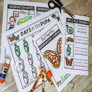 butterfly-life-cycle-observation-journal