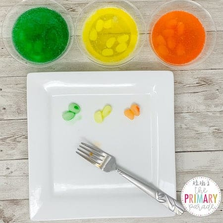 Jelly Bean science experiment for kids