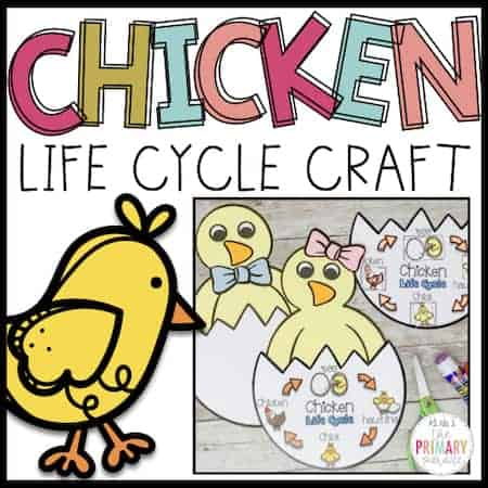 This chicken life cycle craft is the perfect way to teach the life cycle of a chicken this Spring in an Easter theme or farm theme lesson
